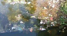 Tìm hiểu nguyên nhân ô nhiễm môi trường đới ôn hoà và hậu quả
